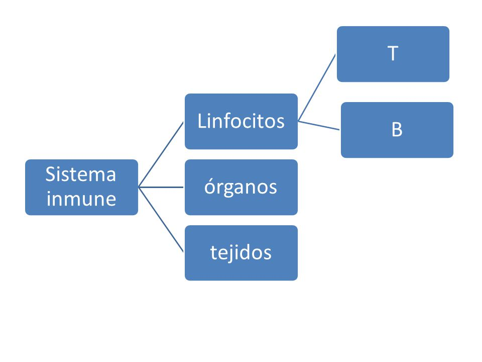 Sistema inmune LinfocitosTBórganostejidos