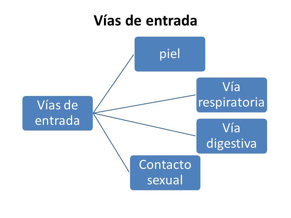 Vías de entrada piel Vía respiratoria Vía digestiva Contacto sexual