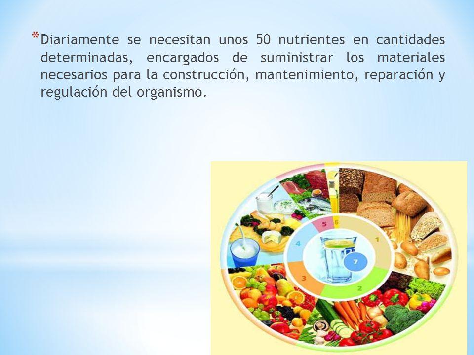 * Diariamente se necesitan unos 50 nutrientes en cantidades determinadas, encargados de suministrar los materiales necesarios para la construcción, ma