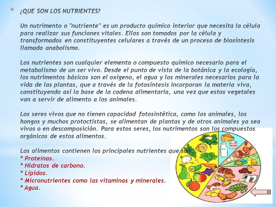 Todos somos consciente de la importancia que tiene para el buen funcionamiento de nuestro organismo, la nutrición y alimentación que tengamos cada día.