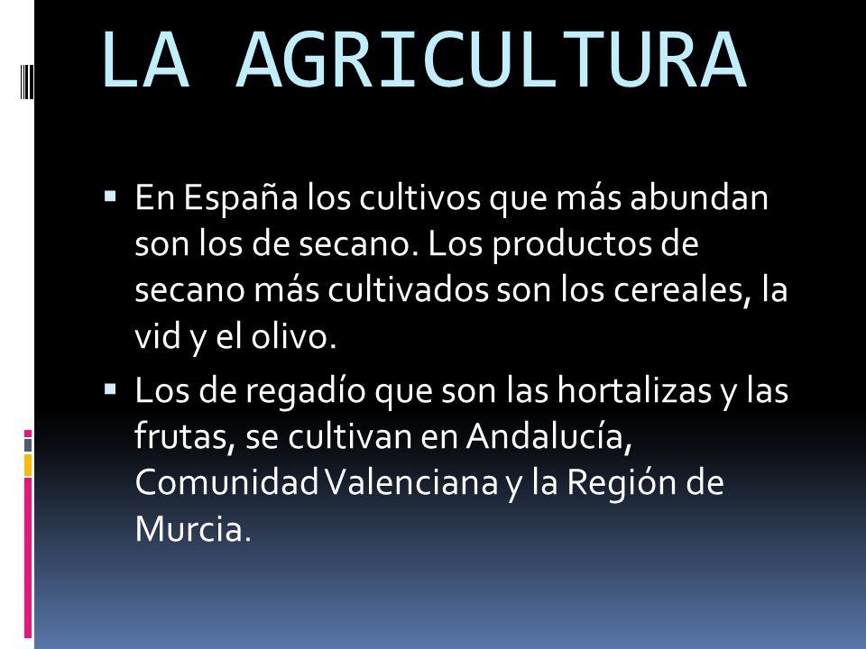 LA AGRICULTURA  En España los cultivos que más abundan son los de secano.