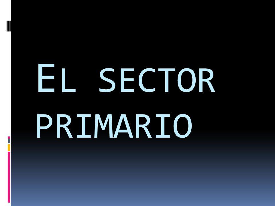  En el sector primario entran las siguientes actividades que solo ocupan 5 de cada 100 personas: