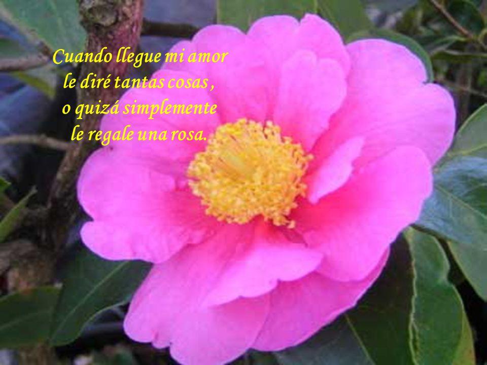 Cuando llegue mi amor le diré tantas cosas, o quizá simplemente le regale una rosa.