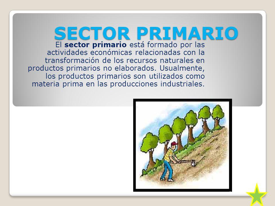 SECTOR PRIMARIO El sector primario está formado por las actividades económicas relacionadas con la transformación de los recursos naturales en productos primarios no elaborados.