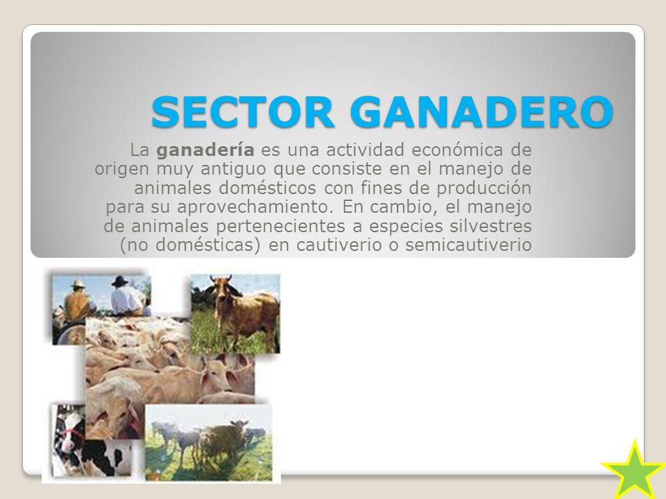 SECTOR GANADERO La ganadería es una actividad económica de origen muy antiguo que consiste en el manejo de animales domésticos con fines de producción para su aprovechamiento.