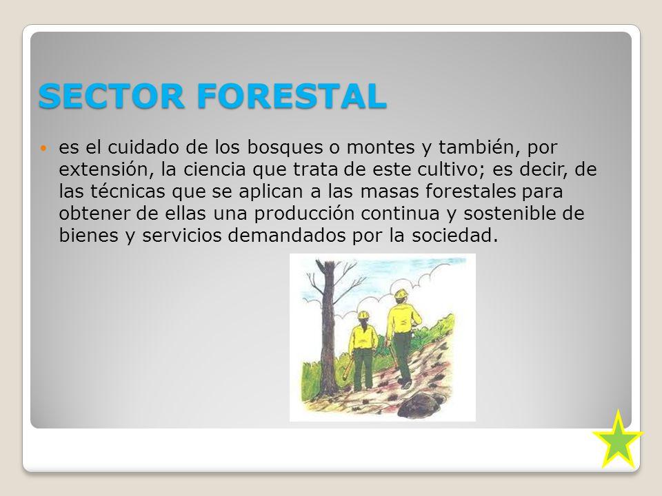 SECTOR FORESTAL es el cuidado de los bosques o montes y también, por extensión, la ciencia que trata de este cultivo; es decir, de las técnicas que se aplican a las masas forestales para obtener de ellas una producción continua y sostenible de bienes y servicios demandados por la sociedad.