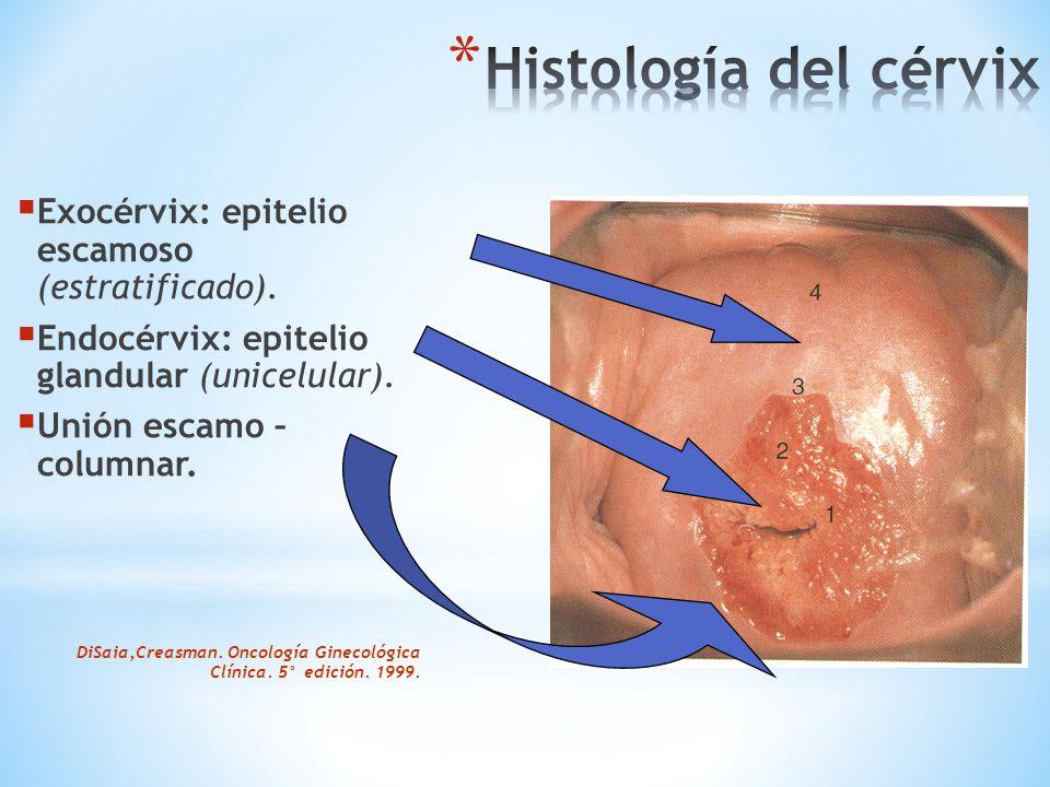  Multiplicación incontrolada y anárquica de las células cervicales.