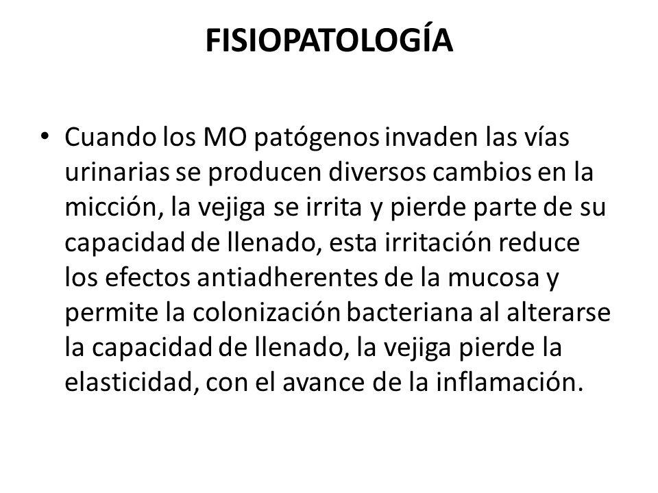 FISIOPATOLOGÍA Cuando los MO patógenos invaden las vías urinarias se producen diversos cambios en la micción, la vejiga se irrita y pierde parte de su
