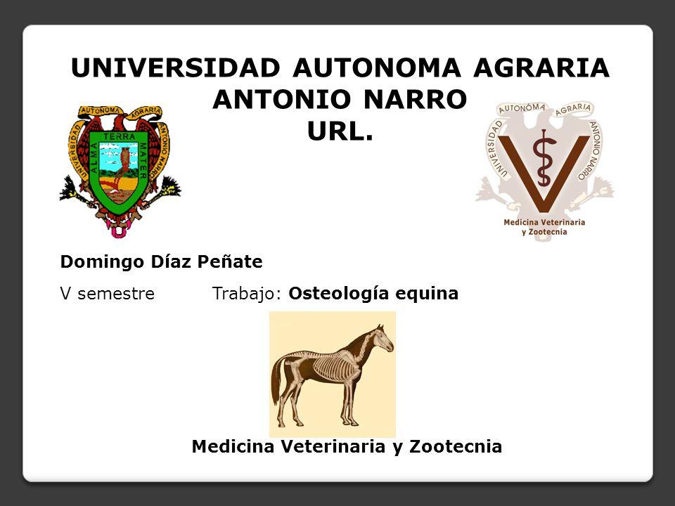 """La presentaci�n """"UNIVERSIDAD AUTONOMA AGRARIA ANTONIO NARRO URL ..."""