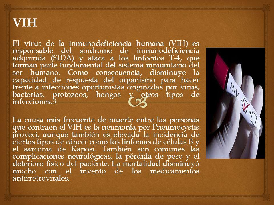 VIH El virus de la inmunodeficiencia humana (VIH) es responsable del síndrome de inmunodeficiencia adquirida (SIDA) y ataca a los linfocitos T-4, que