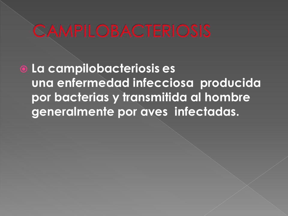  La campilobacteriosis es una enfermedad infecciosa producida por bacterias y transmitida al hombre generalmente por aves infectadas.