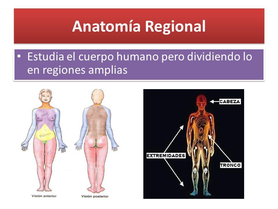 Famoso Qué Significa Superficial En La Anatomía Fotos - Imágenes de ...