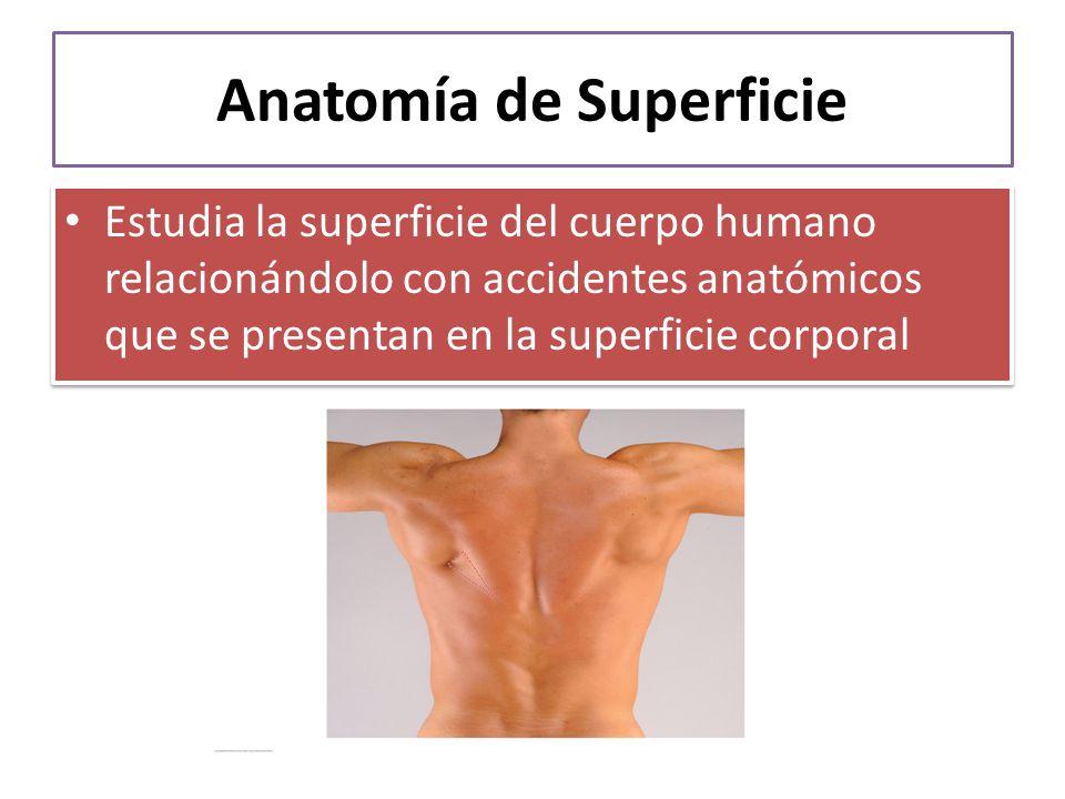 Fantástico Introducción A La Anatomía Humana Y Fisiología Powerpoint ...