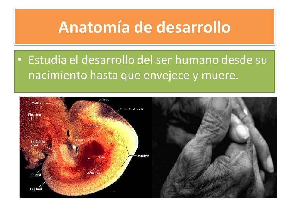 Encantador El Desarrollo De La Anatomía Imágenes - Anatomía de Las ...