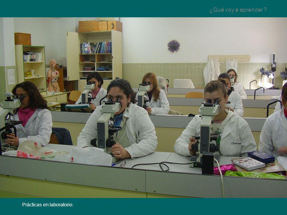 Magnífico Mi Laboratorio De Anatomía Elaboración - Anatomía de Las ...