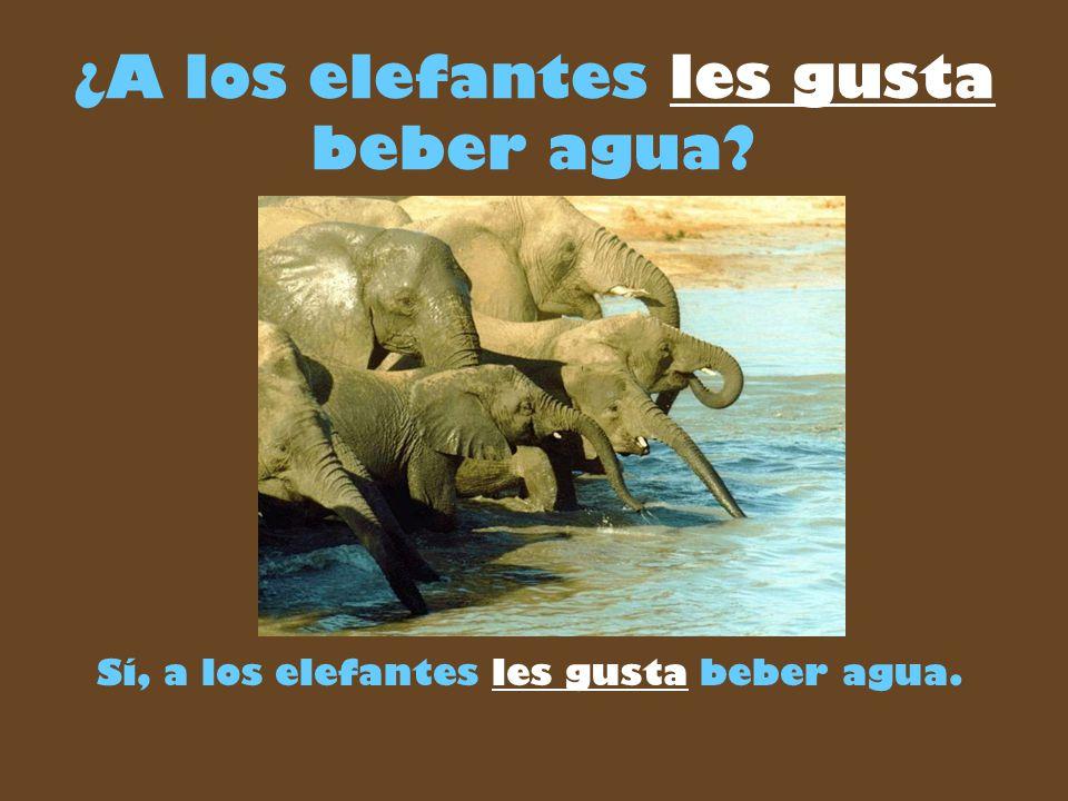¿A los elefantes les gusta beber agua Sí, a los elefantes les gusta beber agua.