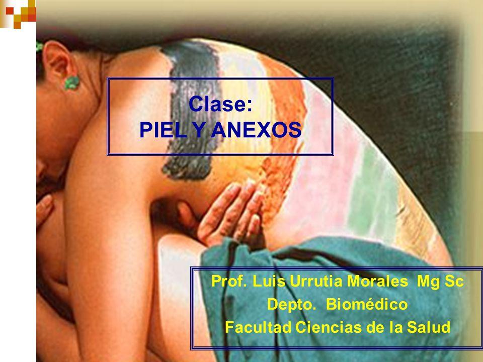 1 Prof. Luis Urrutia Morales Mg Sc Depto. Biomédico Facultad Ciencias de la Salud Clase: PIEL Y ANEXOS