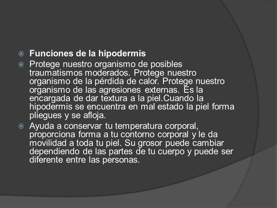 Funciones de la hipodermis  Protege nuestro organismo de posibles traumatismos moderados. Protege nuestro organismo de la pérdida de calor. Protege
