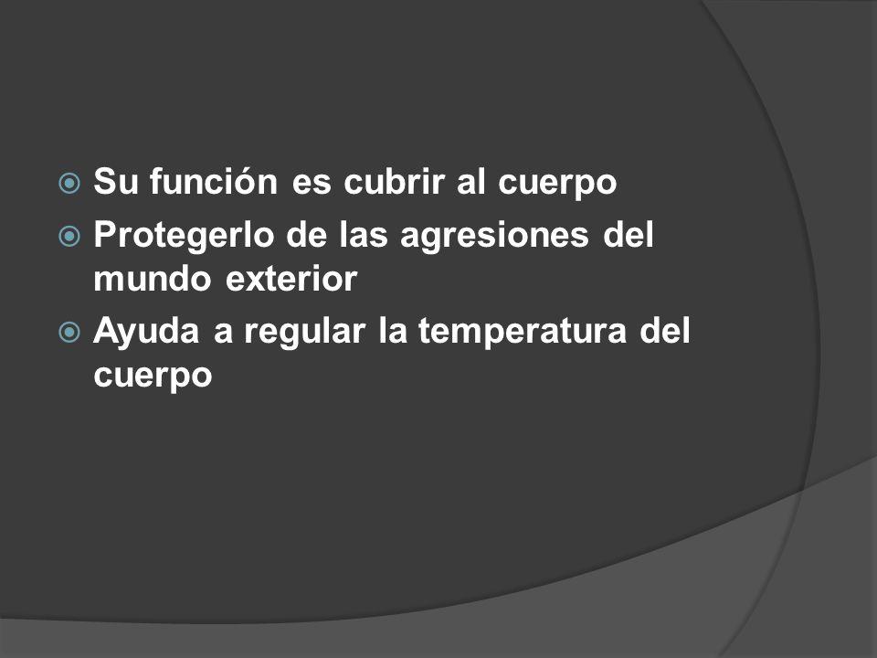  Su función es cubrir al cuerpo  Protegerlo de las agresiones del mundo exterior  Ayuda a regular la temperatura del cuerpo