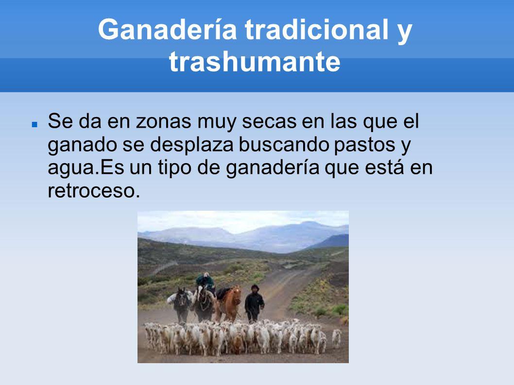 Ganadería tradicional y trashumante Se da en zonas muy secas en las que el ganado se desplaza buscando pastos y agua.Es un tipo de ganadería que está en retroceso.