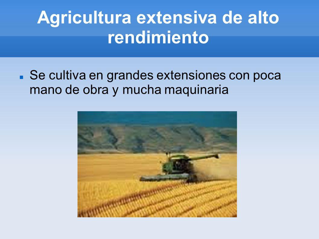 Agricultura extensiva de alto rendimiento Se cultiva en grandes extensiones con poca mano de obra y mucha maquinaria