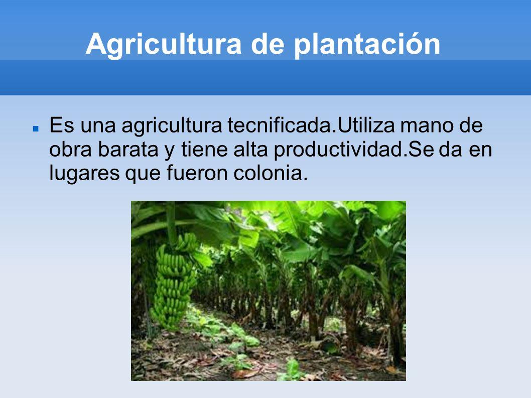 Agricultura de plantación Es una agricultura tecnificada.Utiliza mano de obra barata y tiene alta productividad.Se da en lugares que fueron colonia.