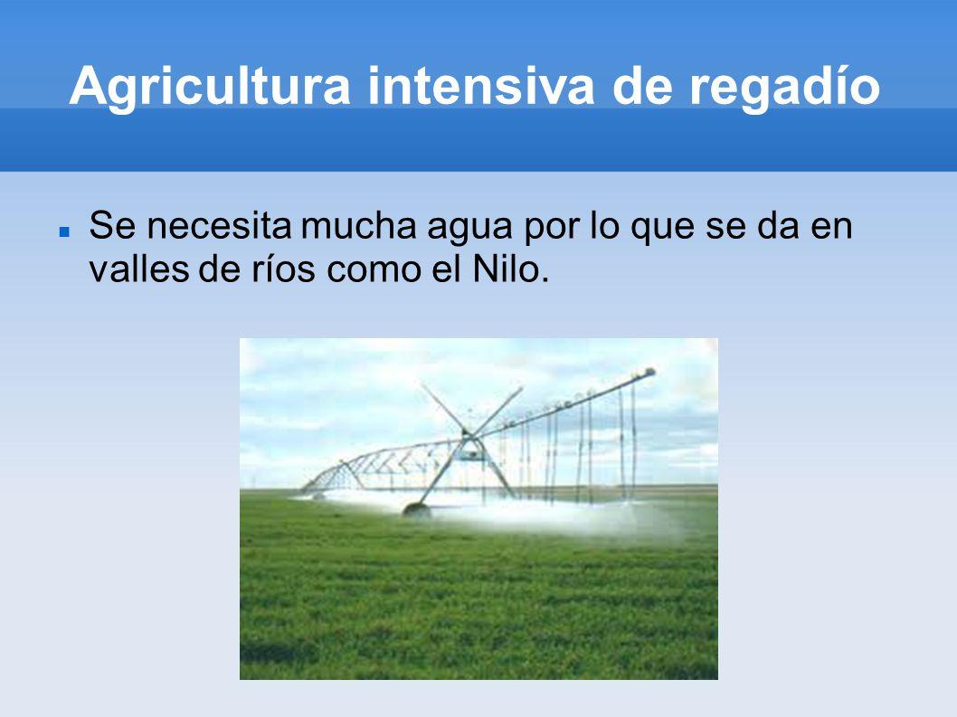 Agricultura intensiva de regadío Se necesita mucha agua por lo que se da en valles de ríos como el Nilo.
