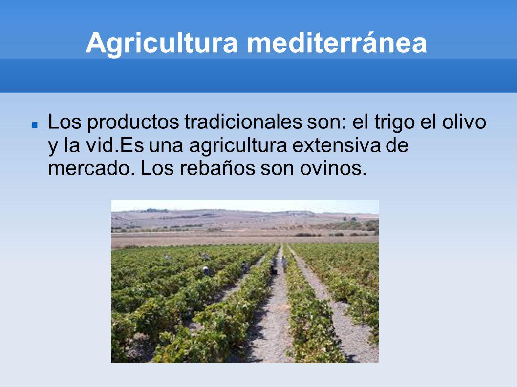 Agricultura mediterránea Los productos tradicionales son: el trigo el olivo y la vid.Es una agricultura extensiva de mercado.