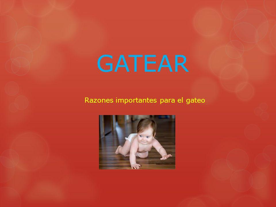 GATEAR Razones importantes para el gateo