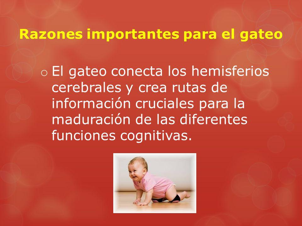 o El gateo conecta los hemisferios cerebrales y crea rutas de información cruciales para la maduración de las diferentes funciones cognitivas.