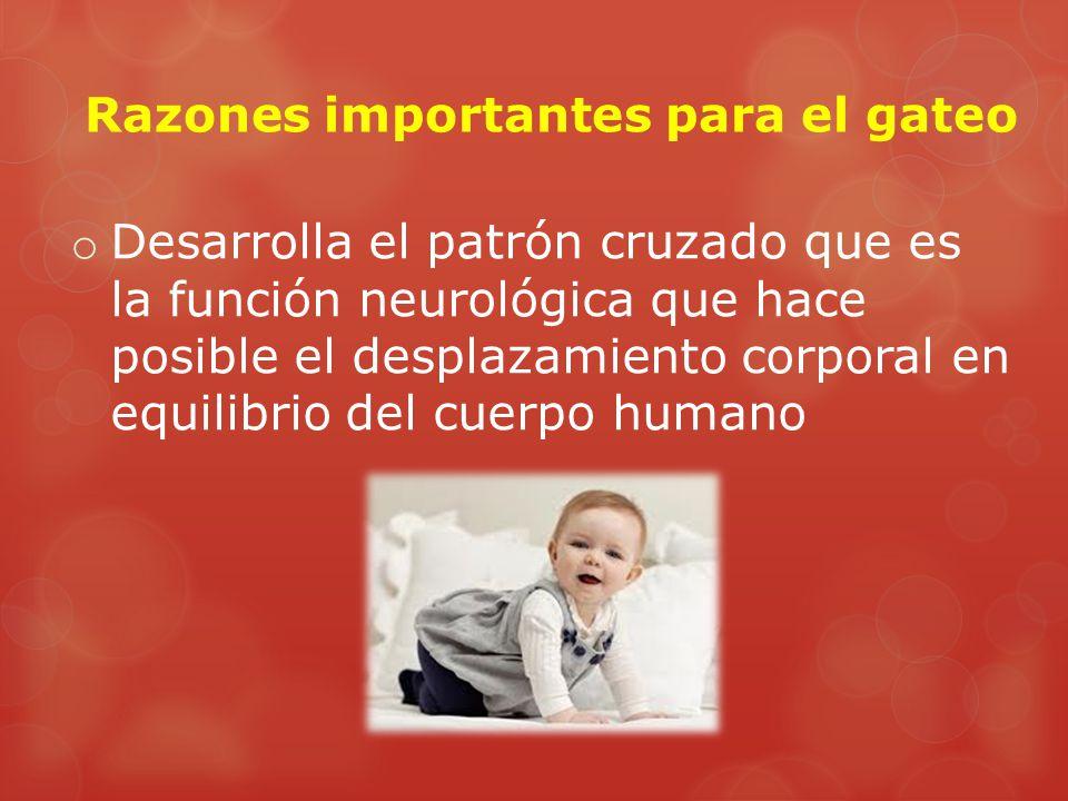 Razones importantes para el gateo o Desarrolla el patrón cruzado que es la función neurológica que hace posible el desplazamiento corporal en equilibrio del cuerpo humano