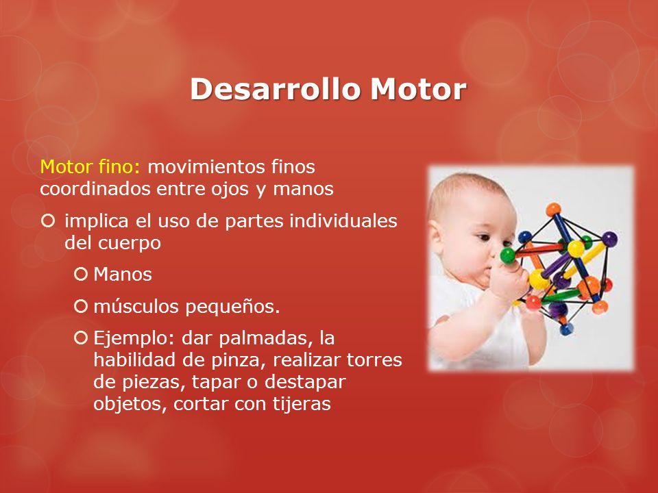 Desarrollo Motor Motor fino: movimientos finos coordinados entre ojos y manos  implica el uso de partes individuales del cuerpo  Manos  músculos pequeños.