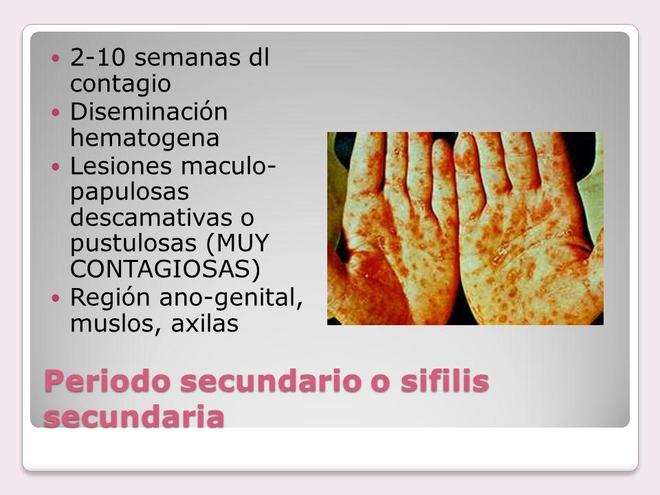 Periodo secundario o sifilis secundaria 2-10 semanas dl contagio Diseminación hematogena Lesiones maculo- papulosas descamativas o pustulosas (MUY CON