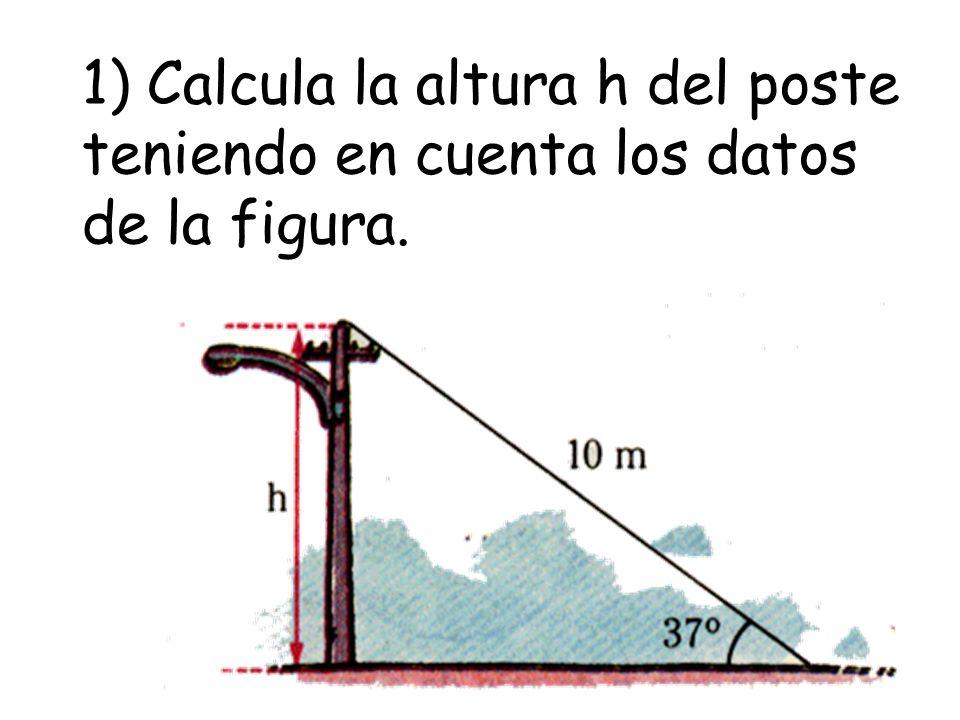 2) En la figura, el segmento AC representa una estaca fija al terreno.