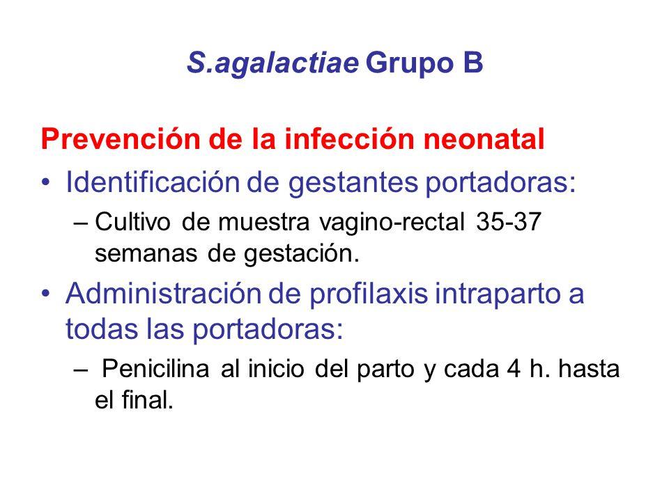 S.agalactiae Grupo B Prevención de la infección neonatal Identificación de gestantes portadoras: –Cultivo de muestra vagino-rectal 35-37 semanas de ge