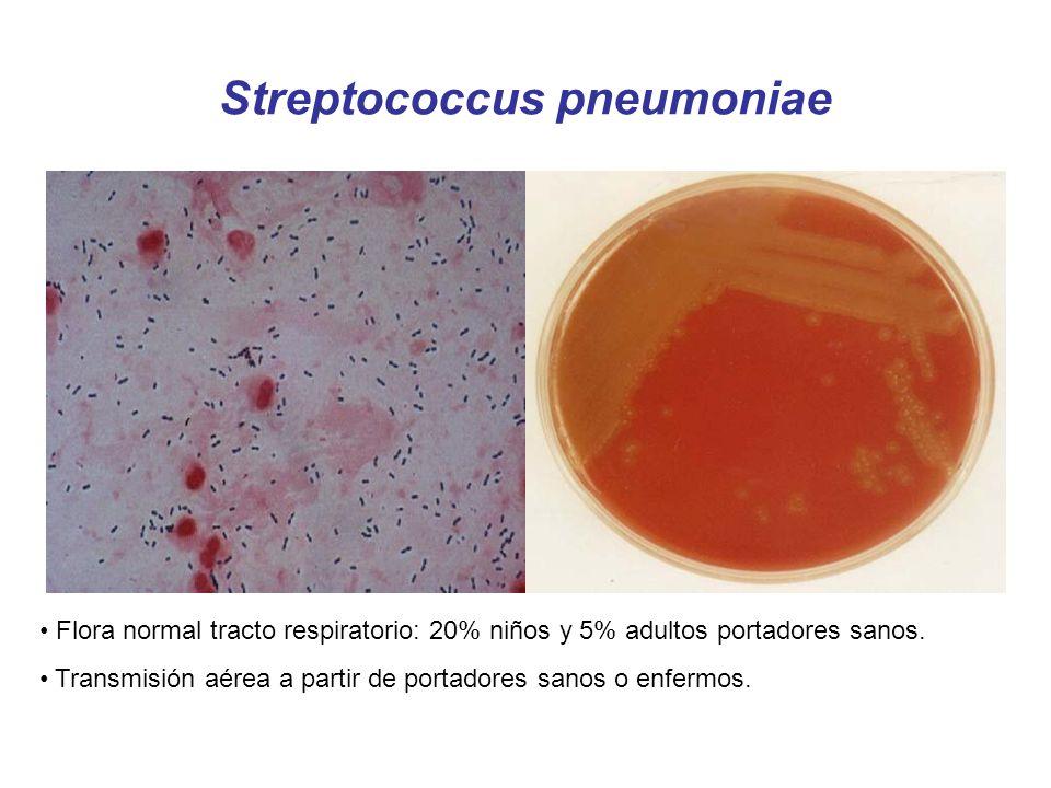 Streptococcus pneumoniae Flora normal tracto respiratorio: 20% niños y 5% adultos portadores sanos. Transmisión aérea a partir de portadores sanos o e