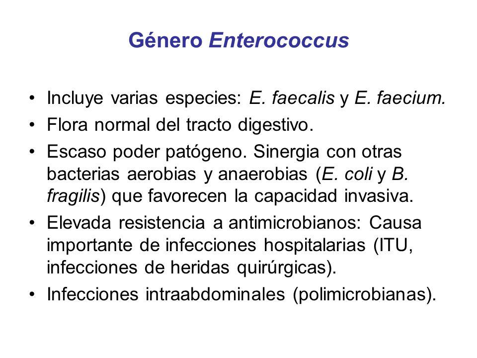 Género Enterococcus Incluye varias especies: E. faecalis y E. faecium. Flora normal del tracto digestivo. Escaso poder patógeno. Sinergia con otras ba