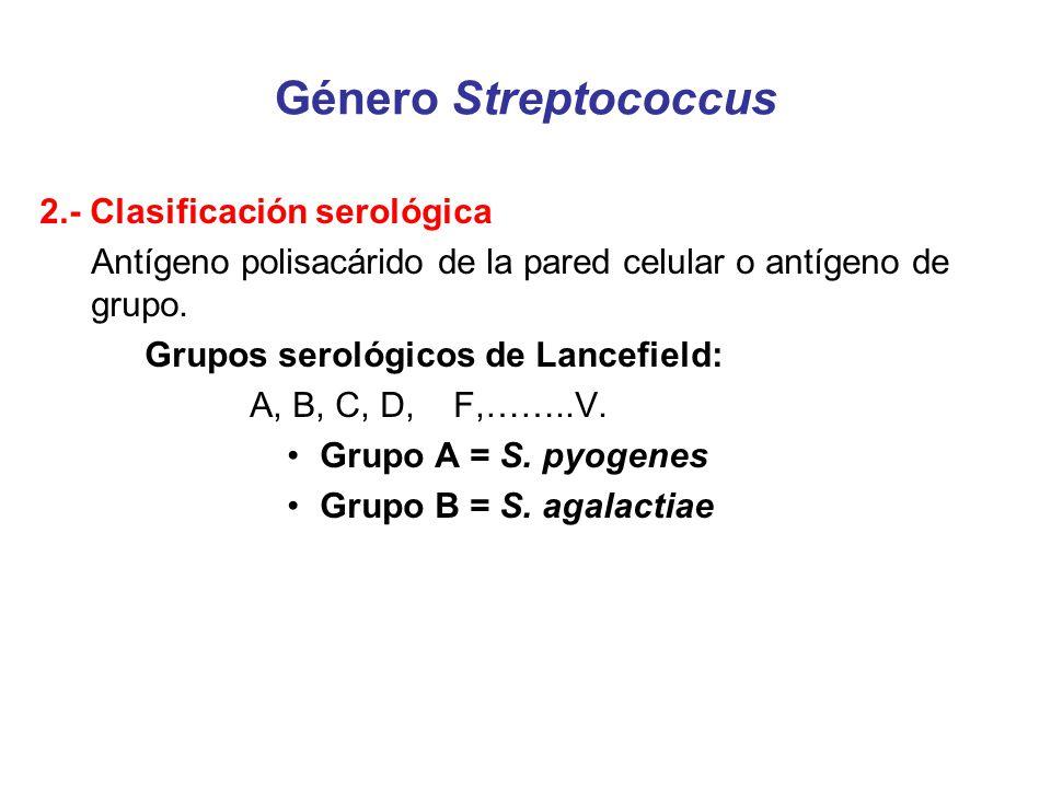 Género Streptococcus 2.- Clasificación serológica Antígeno polisacárido de la pared celular o antígeno de grupo. Grupos serológicos de Lancefield: A,
