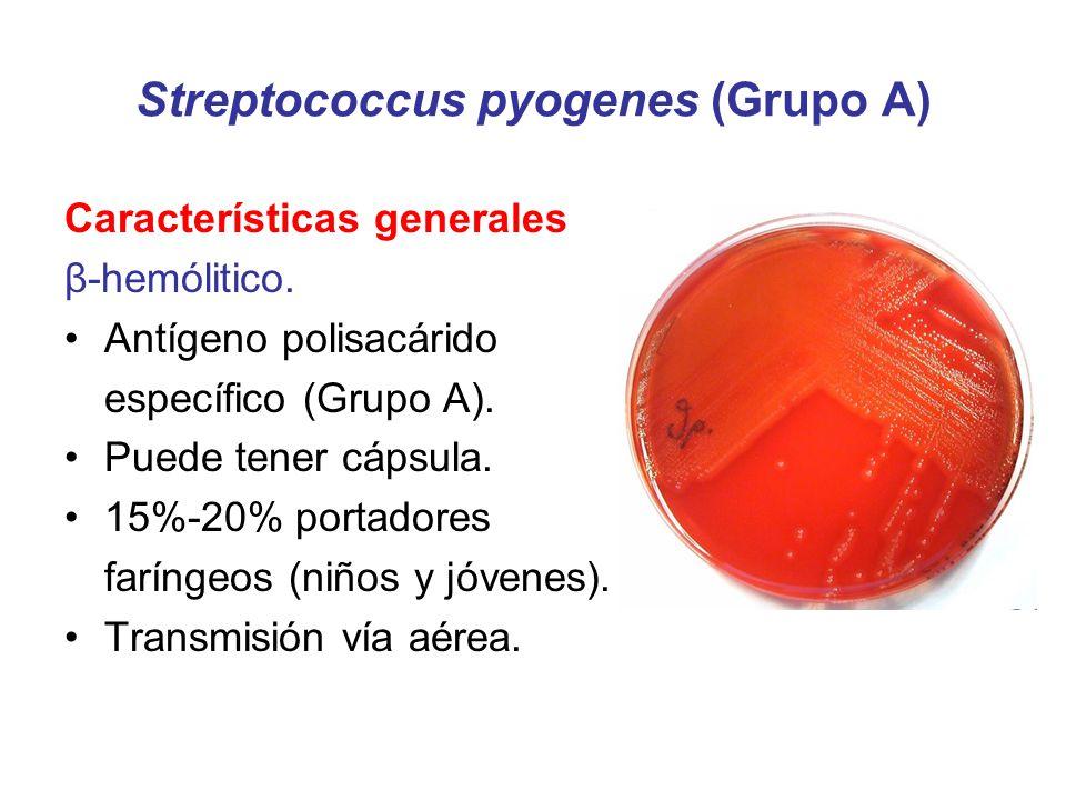 Streptococcus pyogenes (Grupo A) Características generales β-hemólitico. Antígeno polisacárido específico (Grupo A). Puede tener cápsula. 15%-20% port