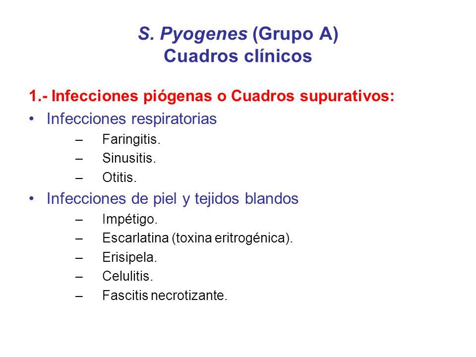 S. Pyogenes (Grupo A) Cuadros clínicos 1.- Infecciones piógenas o Cuadros supurativos: Infecciones respiratorias –Faringitis. –Sinusitis. –Otitis. Inf