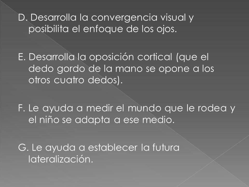 D.Desarrolla la convergencia visual y posibilita el enfoque de los ojos.