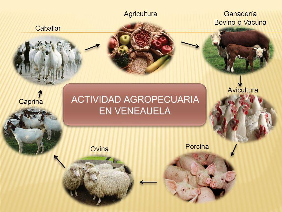 El relieve: Los lugares más aprovechables para la producción agropecuaria son los valles, las ladera y las llanuras.