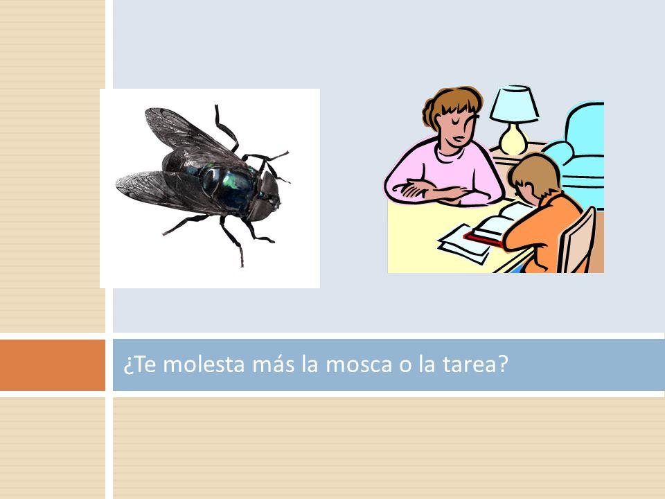 ¿Te molesta más la mosca o la tarea