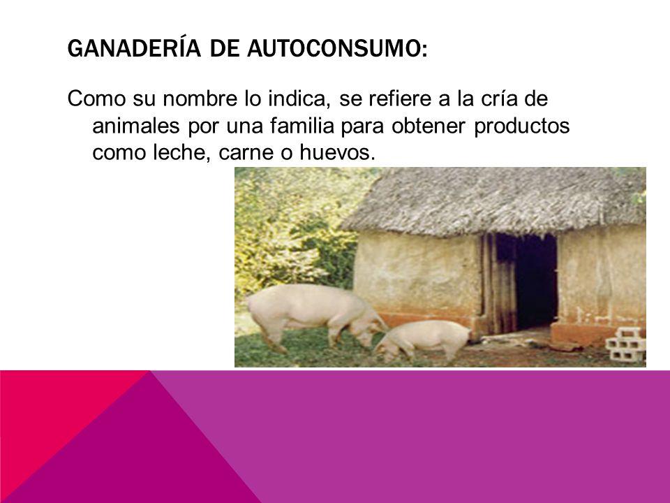 GANADERÍA DE AUTOCONSUMO: Como su nombre lo indica, se refiere a la cría de animales por una familia para obtener productos como leche, carne o huevos.