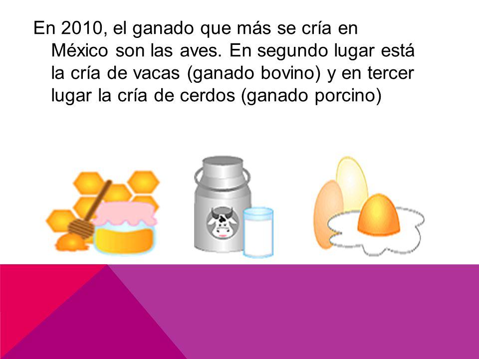 En 2010, el ganado que más se cría en México son las aves.