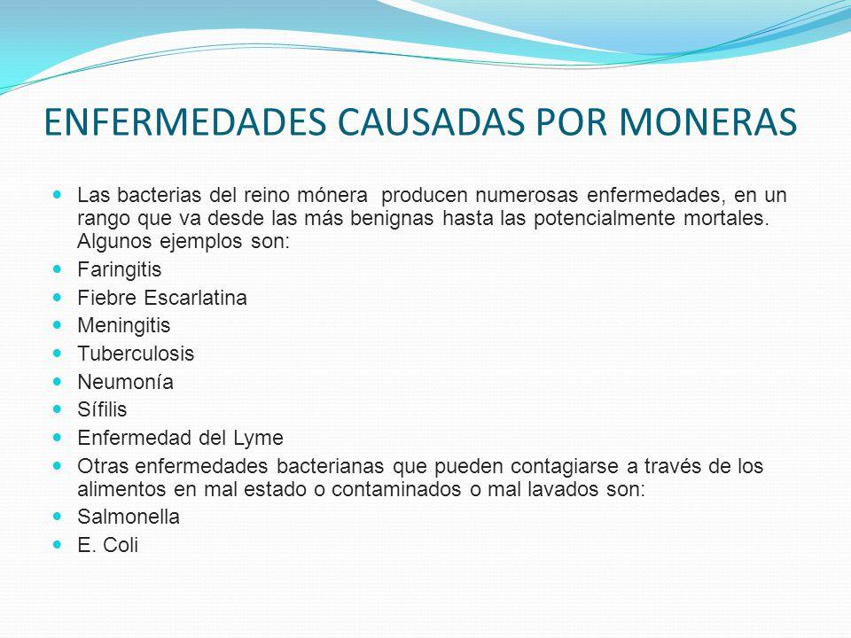 REINO MONERA Mónera es el término científico con que denomina a las bacterias.