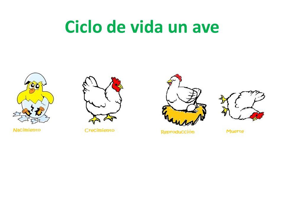 Ciclo vital de los animales Profesora Viviana Briceño, Segundo año