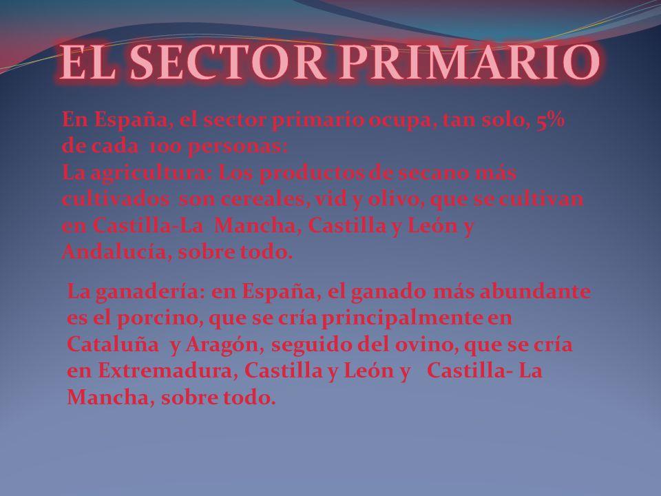 En España, el sector primario ocupa, tan solo, 5% de cada 100 personas: La agricultura: Los productos de secano más cultivados son cereales, vid y oli