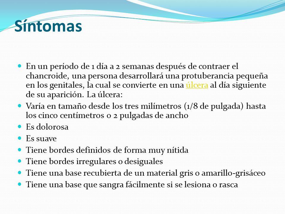 Síntomas En un período de 1 día a 2 semanas después de contraer el chancroide, una persona desarrollará una protuberancia pequeña en los genitales, la