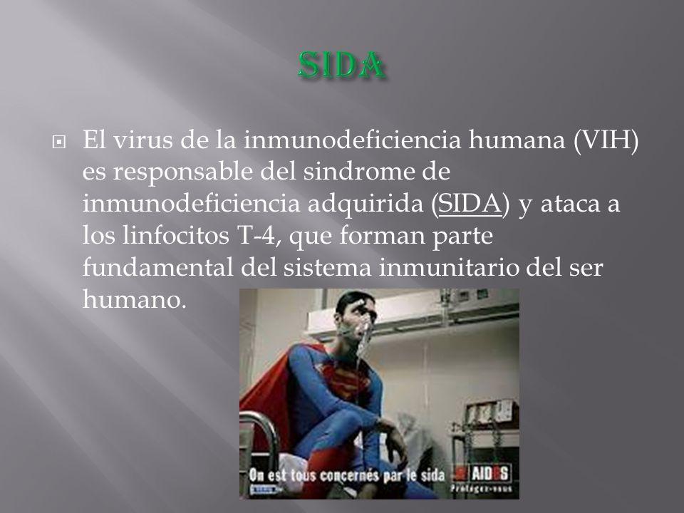  El virus de la inmunodeficiencia humana (VIH) es responsable del sindrome de inmunodeficiencia adquirida (SIDA) y ataca a los linfocitos T-4, que forman parte fundamental del sistema inmunitario del ser humano.